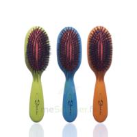 Cartel Brosse Cheveux Pneumatique Sanglier Médium à LORMONT